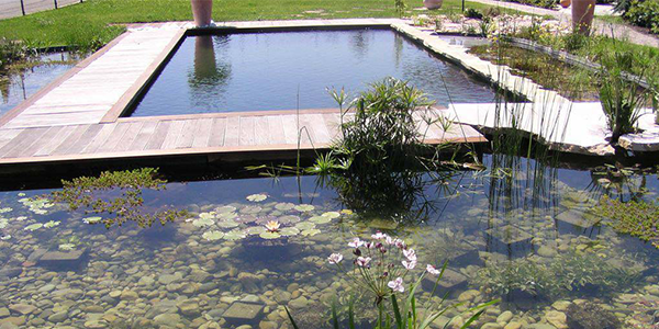 Le bassin de baignade entre design et loisirs for Piscine naturelle design