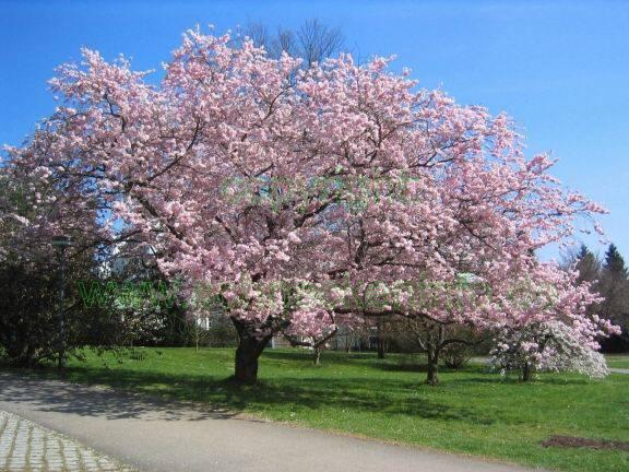 Se d tendre gr ce un jardin japonais for Arbre feuillage persistant pour petit jardin